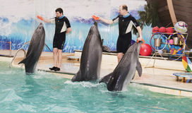 Dolphins - mother and two sons brought trainers rubber rings Stock Photo