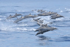 Dolphins in ocean Stock Images