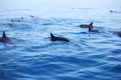 Dolphins in ocean waves Royalty Free Stock Photos