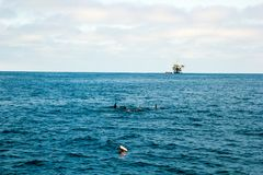 Dolphins and Oil Rig Royalty Free Stock Photography