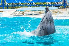 Dolphins and other marine animals performs trick Royalty Free Stock Photography