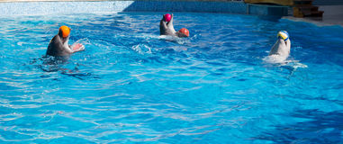 Dolphins play balls Royalty Free Stock Photo