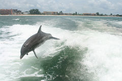 Dolphins playing Stock Image