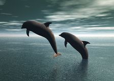 Dolphins Playing Royalty Free Stock Images