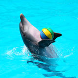 Dolphins playing in the blue water with balls. Trained dolphins playing with a ball in the pool Royalty Free Stock Photography