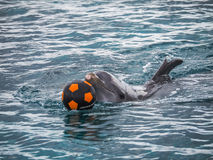 Dolphins playing with a football nd splashing Stock Photo
