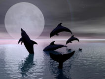 Dolphins playing in the moonlight stock images
