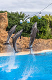 Dolphins Reaching Balls Stock Image