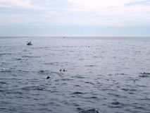 Dolphins in the sea in front of Mirissa / Sri Lanka Stock Images