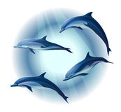 Dolphins. Set of four dolphins, illustration royalty free illustration