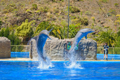 Dolphins show at animal park in Gran Canaria, Spain Stock Images
