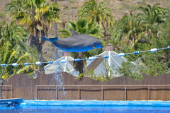 Dolphins show at animal park in Gran Canaria, Spain Stock Photos