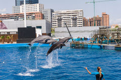 Dolphins show Stock Photos