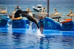 Dolphins show in Palma de Mallorca Royalty Free Stock Images