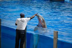 Dolphins show in Palma de Mallorca Royalty Free Stock Photography