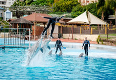 Dolphins show in Selwo Marina Royalty Free Stock Photo
