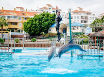 Dolphins show in Selwo Marina Stock Photo