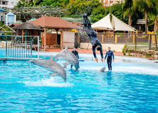 Dolphins show in Selwo Marina in Benalmadena Stock Photography