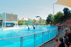 Dolphins show at water amusement park. Rome, Italy - August 2016: Dolphins show at water amusement park zoomarine Royalty Free Stock Images