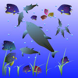 Dolphins, small fish, water, bubbles, water grass. At sea, swim a few dolphins, colorful fish, the air bubbles Stock Images