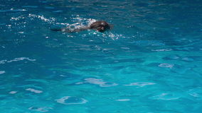 Dolphins Swim in the Pool. Cheerful dolphin in the dolphinarium stock footage
