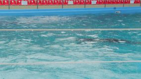 Dolphins Swim In The Rain stock video