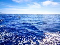 Dolphins swimming in the Atlantic Ocean in front of Los Gigantes, Canary Islands, Tenerife stock photo