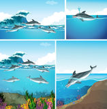 Dolphins swimming in the ocean Stock Image