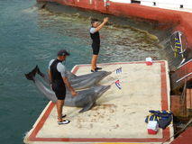 DOLPHINS AND THEIR TRAINERS AFTER A SHOW, CUBA Royalty Free Stock Photography