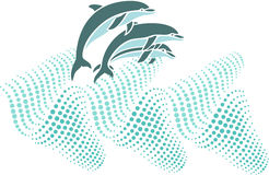 Dolphins Stock Photos