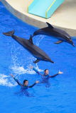 Dolphins and trainers. Dolphins and their trainers perform onstage at Hong Kong Ocean Park theater on April 16, 2009 in Hong Kong, China Stock Image