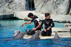Dolphins and trainers. A dolphin play whith trainer at the water park Oltremare in Riccione,Italy Stock Photo