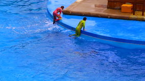 Dolphins and trainers at ocean park hong kong stock video footage