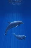 Dolphins Undersea Stock Image