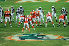 Dolphins vs Jets royalty free stock photo