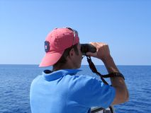 Dolphins watching. Madeira Island royalty free stock photo