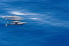 Dolphins in the water royalty free stock photos
