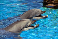 The dolphins in the water Royalty Free Stock Image