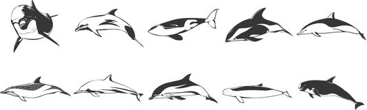 Dolphins and Whales Royalty Free Stock Photography