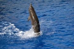 dolphyn 库存照片