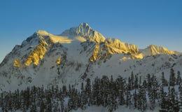 Dolt berg för snö av Mt Shuksan badade i guld- ljus Arkivfoton