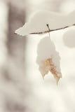 Dolt blad för enkel snö Fotografering för Bildbyråer