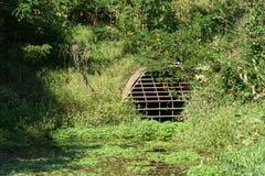 Dolt dräneringdamm för alger i Wisconsin arkivbilder