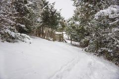 Dolt skogsmarkspår för snö Arkivbild