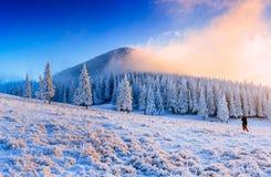Dolt träd för magisk vintersnö Carpathian Ukraina, Europa Arkivfoton
