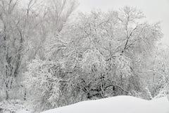 Dolt träd för ny snö Fotografering för Bildbyråer