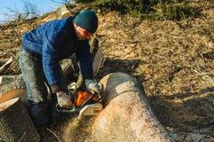 Dolyna, Ukraina, 25 2019 Luty Mężczyzna rzeźbi trawa ścinaka zobaczył drzewa od Stihl ms 180 dla zbierać łupkę w zimie obraz royalty free