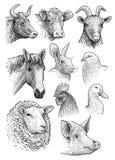 Domésticos, os animais de exploração agrícola dirigem a ilustração da coleção do retrato, desenho, gravura, tinta, linha arte, ve ilustração stock