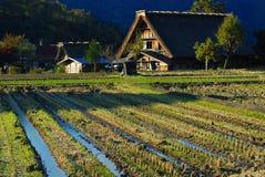 Domów wiejskich ryż pole fotografia royalty free