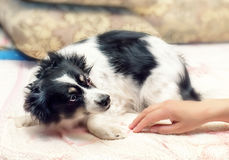Dom okaleczający pies fotografia stock
